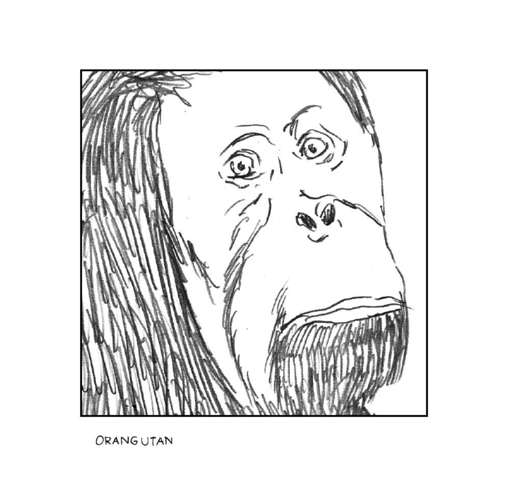 """aus """"Erlebniss-Zoo"""" von Christoph Brandes"""